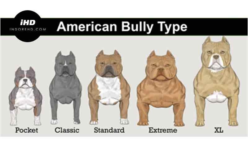 Presa Canario vs Pitbull  Pitbull Puppies
