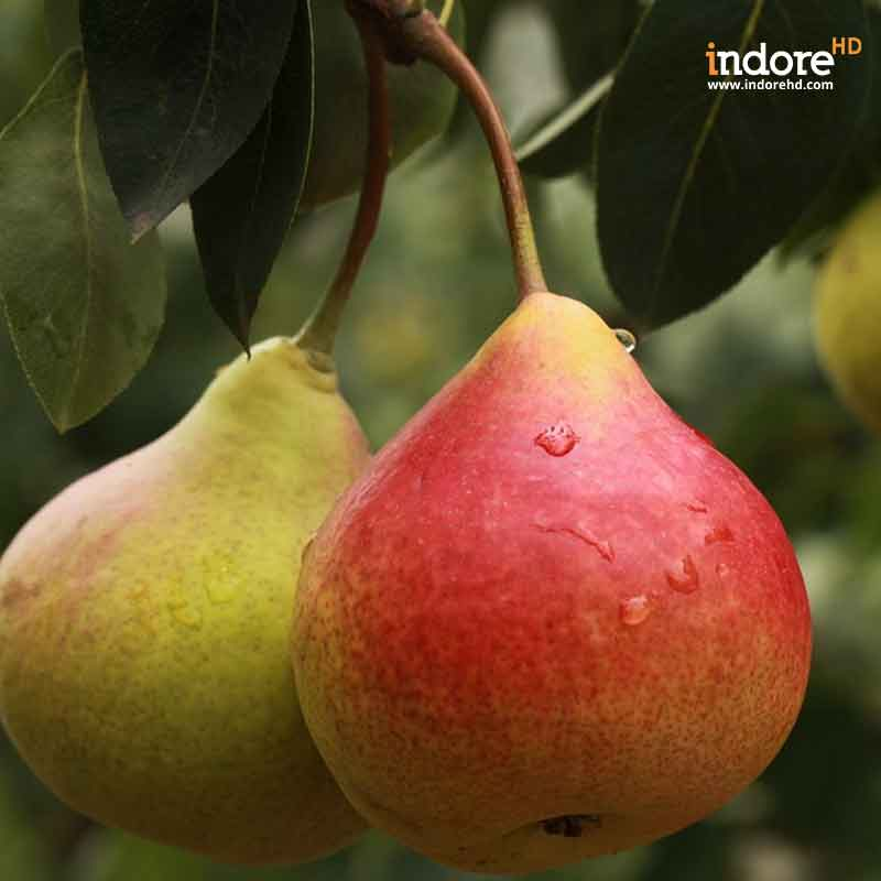 Fifteen-Powerful-Fruits-To-Lose-Weight-And-Burn-Belly-Fat-Instantly-Pears-1