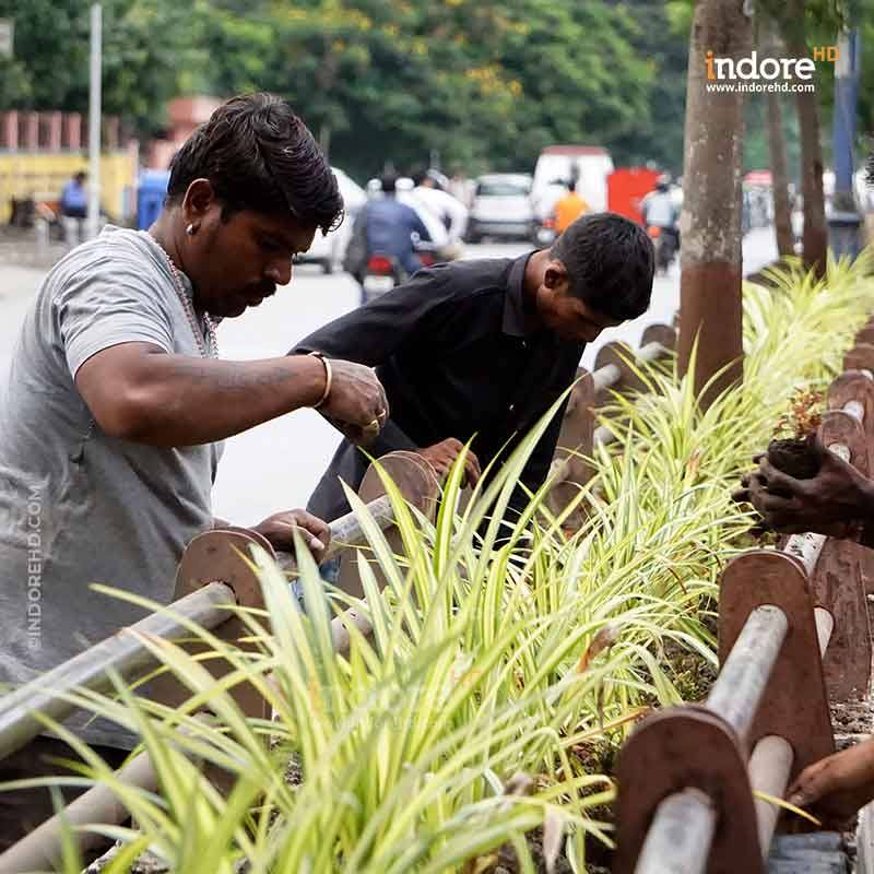 Indore- plant trees- IndoreHD
