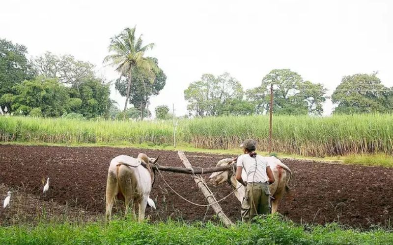 reason for farmer protests